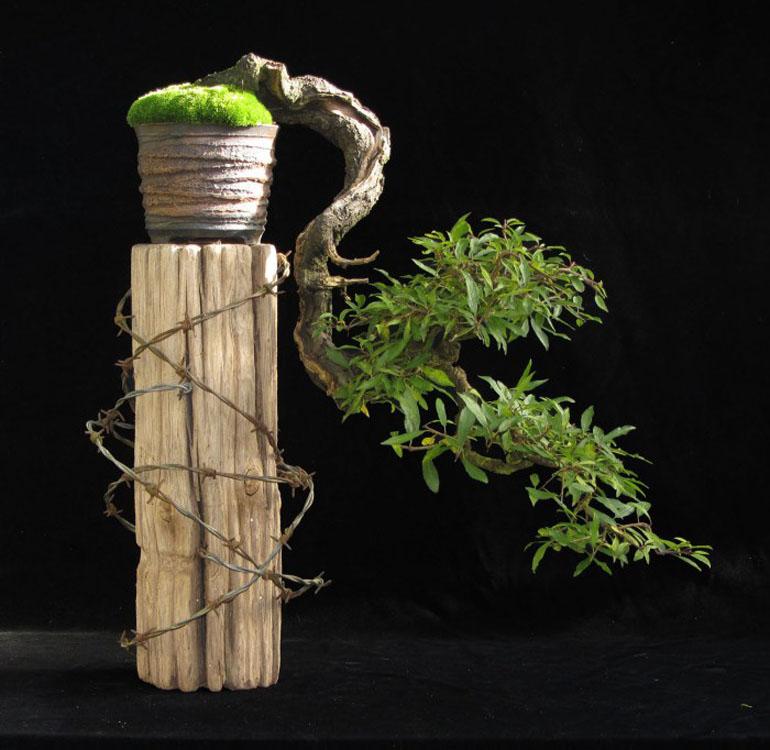 bonsai bark promoting and expanding the bonsai universe page 98 rh bonsaibark com