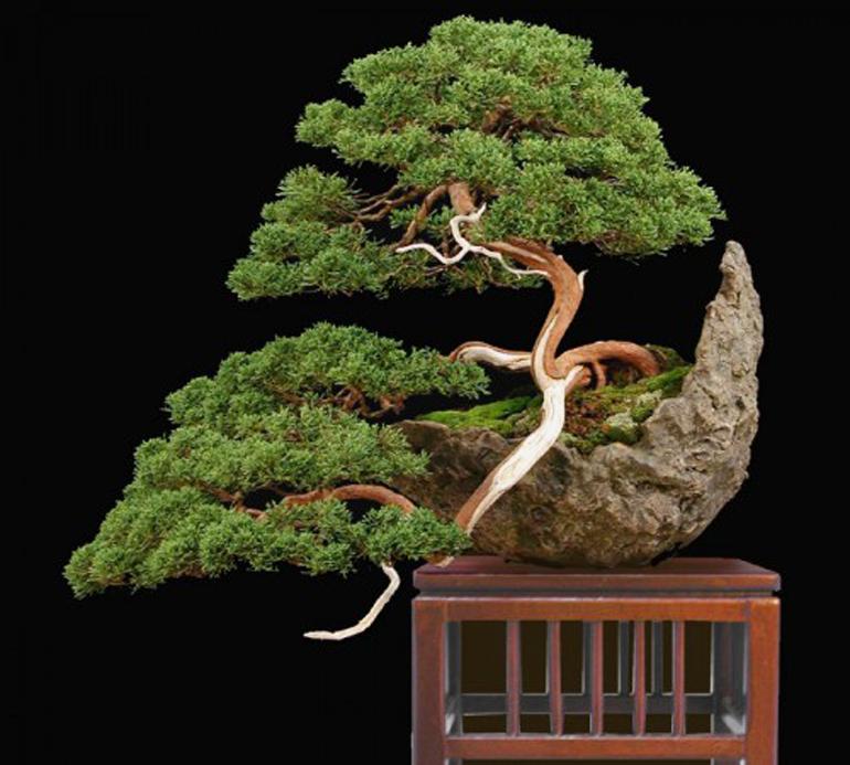 Colin s moon pot bonsai bonsai bark for Unique bonsai trees
