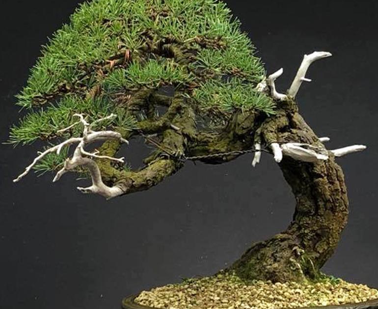 deadwoodcu