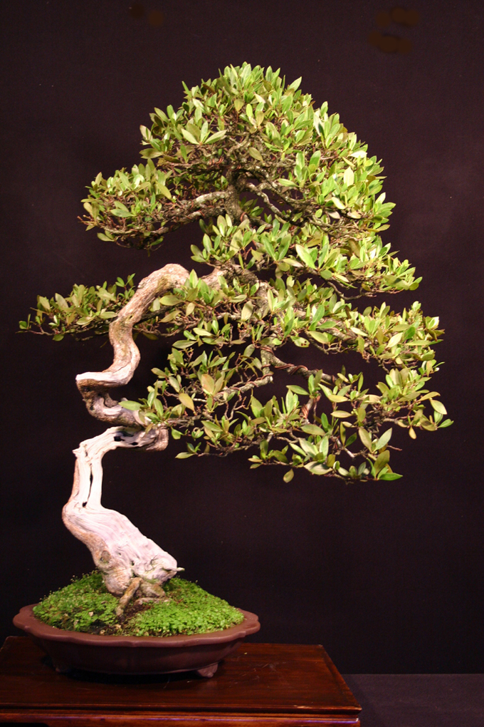 From The Art Of Bonsai Project Ed S Have Been Featured In Today Magazine Back Issues Now 40 Off