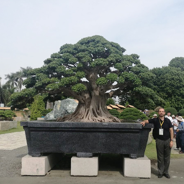 Image result for imperial bonsai