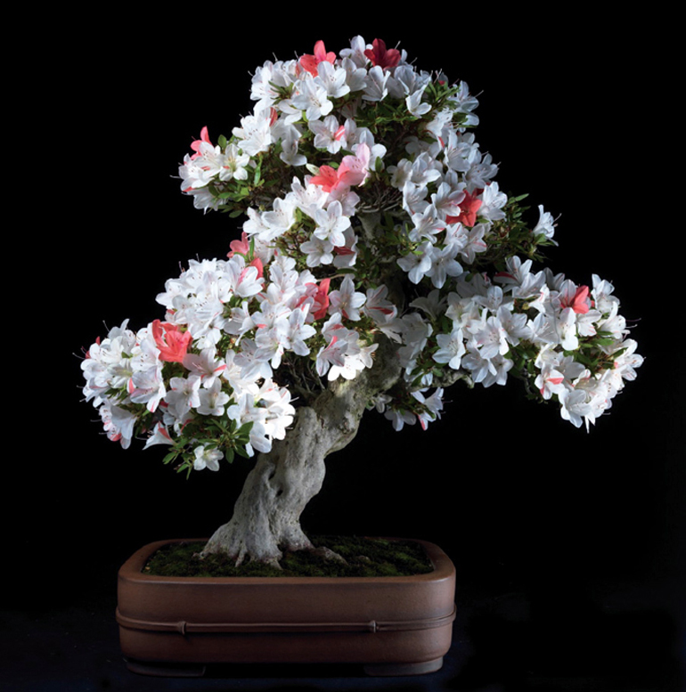 fineflowers