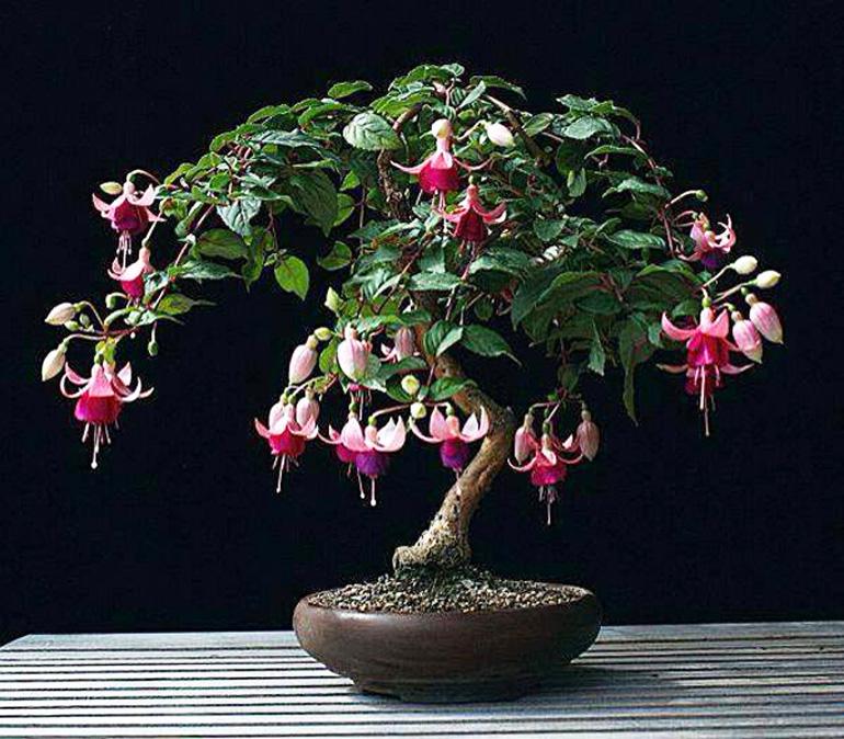 Flowering Bonsai Some Other Good News Bonsai Bark