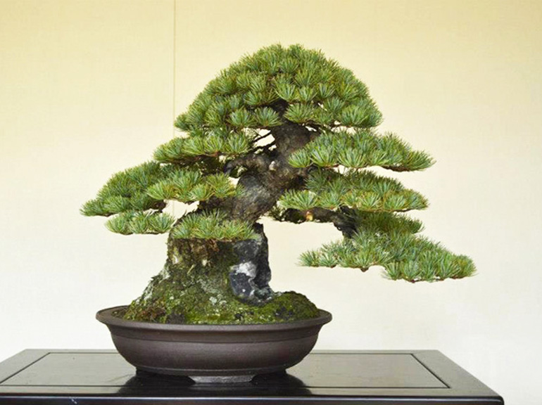 You Don T Have To Go To Japan To Study Bonsai With Bjorn Bonsai Bark