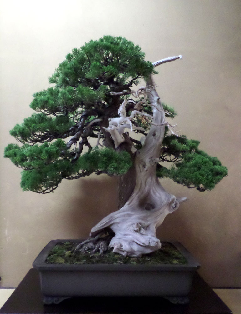 the best most expensive bonsai market bonsai bark