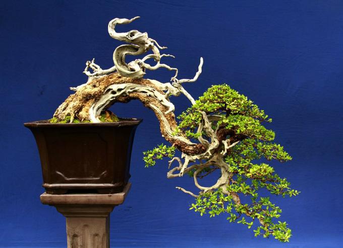 weeky wire world bonsai day  free bonsai wire  kokufu Bonsai Copper Wire Bonsai Silhouette