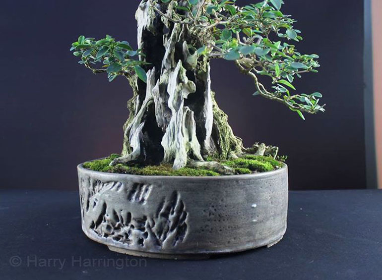 Large Bonsai With Thick Trunks Are Nearly Always Developed In The Ground Bonsai Bark