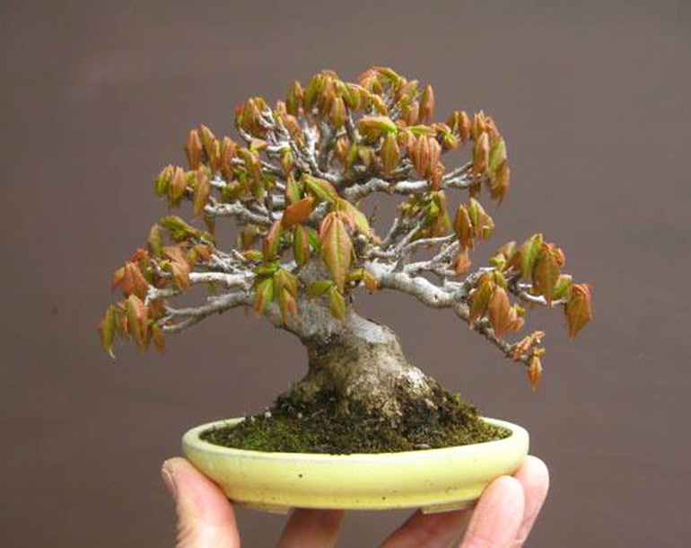 Tiny Bonsai Tiny Pots Bonsai Bark