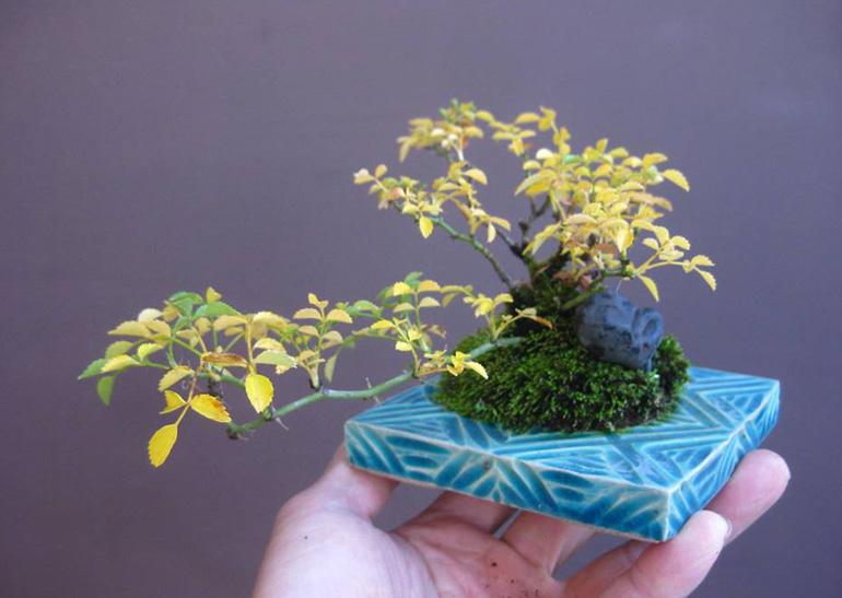 Brilliant Bonsai Color Combinations Bonsai Bark