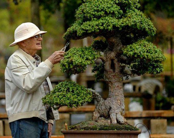 A True Gentleman A Very Large Tree Bonsai Bark