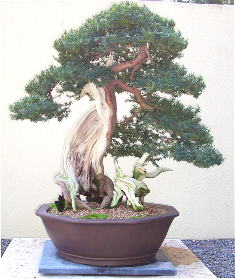 korean-yew-pac-rim