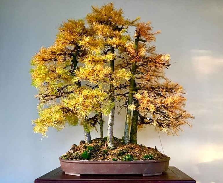 larch2a
