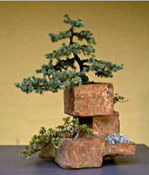 a most unusual bonsai artist bonsai bark