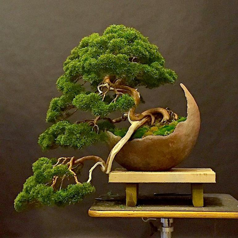 Colin s moon pot bonsai bonsai bark for Vasi bonsai giapponesi
