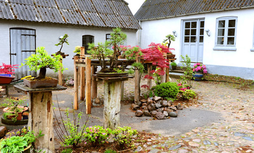 Image Result For How To Start A Garden In My Backyard