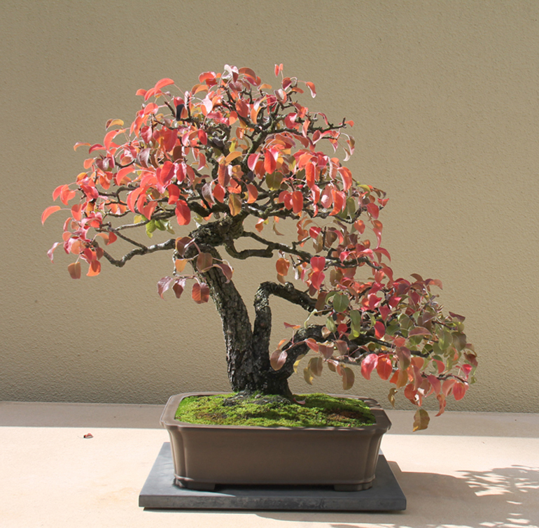 Bonsai Bark Promoting And Expanding The Bonsai Universe Page 120