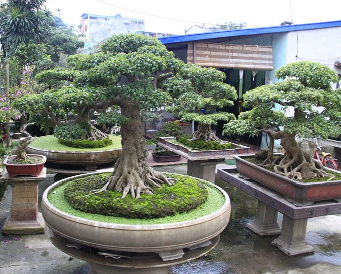 A Magical Land Where Almost Every House Has A Bonsai