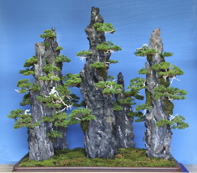 Bonsai Bark Promoting And Expanding The Bonsai Universe Page 14