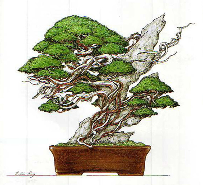 A Pencil And Paper And A Desire To Improve Your Eye For Bonsai Design Bonsai Bark