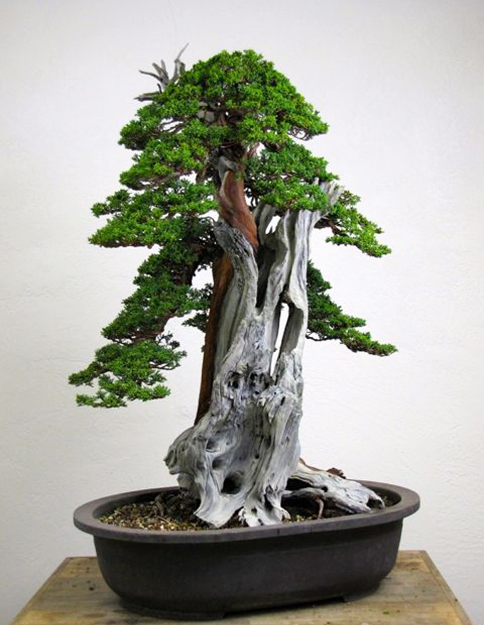 Twenty Eight Questions For Peter Tea Bonsai Bark