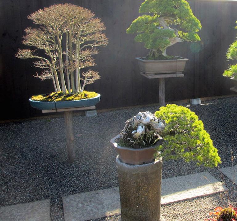 Backyard Bonsai 15 Bonsai Bark