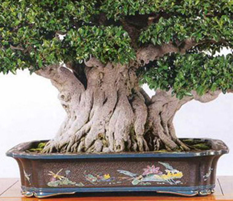 Monster Bonsai True Confession The Meaning Of Life Bonsai Bark