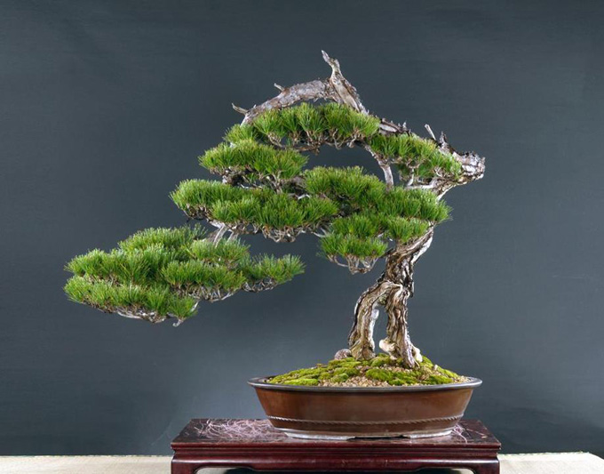 Bonsai Bark Promoting And Expanding The Bonsai Universe Page 201
