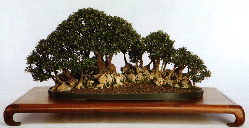 Master S Gallery Melba Tucker S Olive Suiseki Bonsai Bark