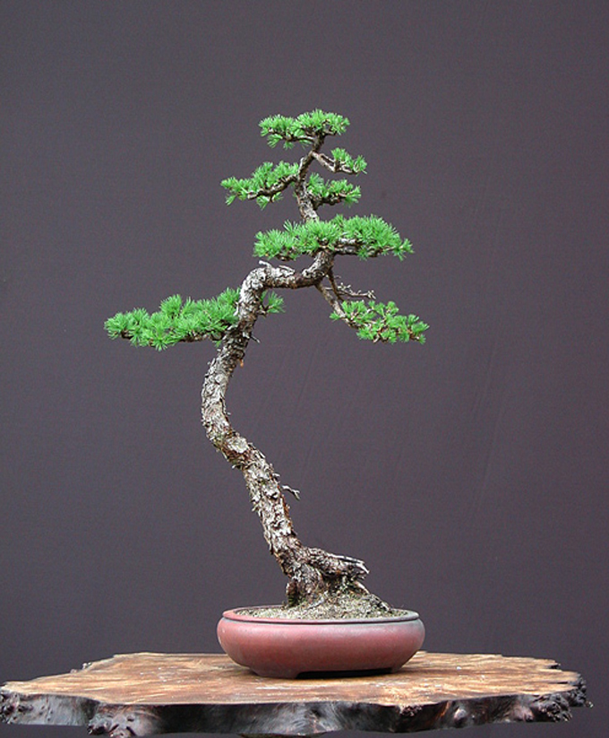 Getting Out Of The Way Bonsai Bark