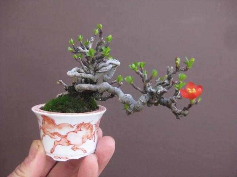 Plants tolerant of black walnut toxicity  The Morton