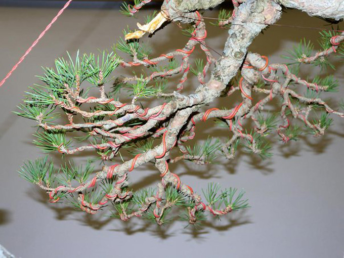 FREE Bonsai Wire & Tool Sale | Bonsai Bark on