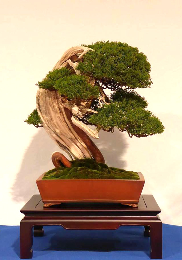Bonsai Bark Promoting And Expanding The Universe Page 46 Wiring Maple Yama2017noelanders